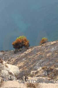 Burnt tree europe ash spain.