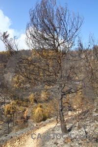 Burnt tree javea ash europe.