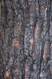 Burnt wood bark europe texture.
