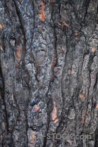 Burnt wood javea bark spain.