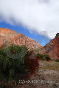 Bush cliff rock cerro de los siete colores landscape.