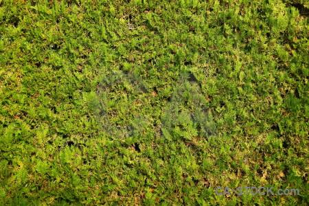 Bush europe texture javea tree.