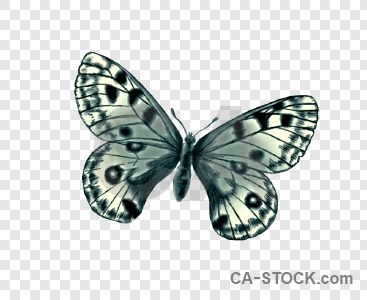Butterfly cut out animal transparent insect.