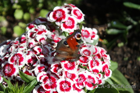 Butterfly flower animal insect plant.