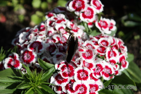 Butterfly flower insect plant animal.