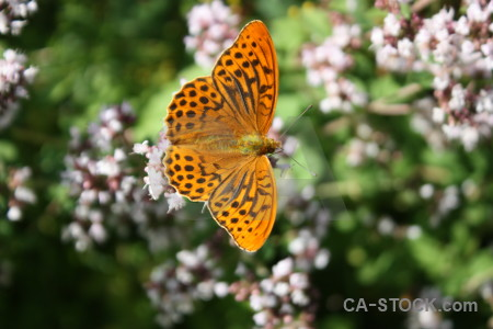 Butterfly insect animal flower plant.