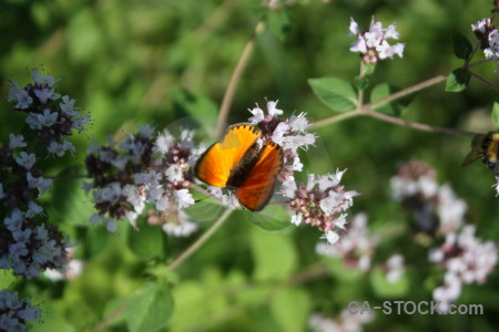 Butterfly insect plant flower animal.