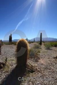 Cactus altitude sky plant south america.