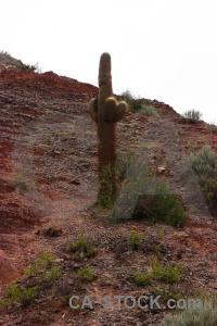 Cactus cerro de los siete colores rock sky salta tour.
