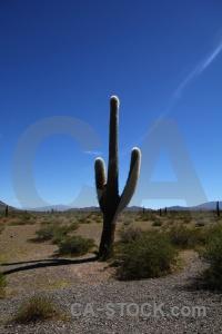 Cactus landscape plant salta tour 2 mountain.