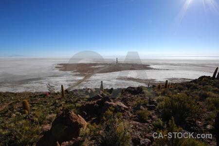 Cactus landscape sky salar de uyuni salt flat.