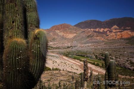 Cactus mountain unesco quebrada de humahuaca plant.