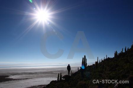 Cactus sky bolivia south america salt flat.