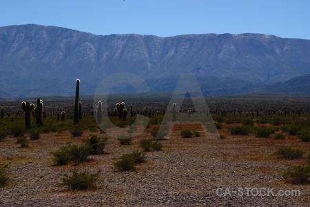 Cactus sky plant salta tour 2 landscape.
