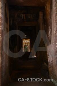 Cambodia angkor ruin buddhist fungus.