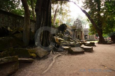 Cambodia asia lichen stone tomb raider.