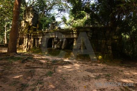 Cambodia asia moss fungus tomb raider.