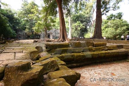 Cambodia block fungus plant stone.