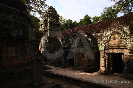 Cambodia fungus siem reap unesco asia.