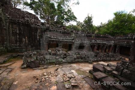 Cambodia fungus southeast asia siem reap angkor.