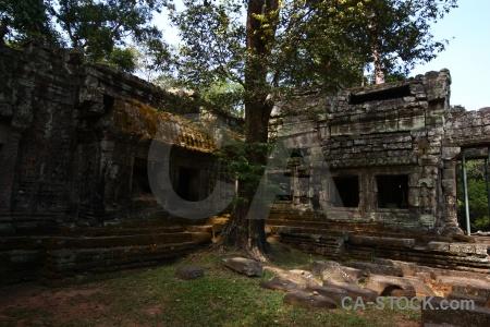 Cambodia stone fungus tree khmer.