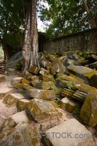 Cambodia tomb raider stone fungus banyan tree.