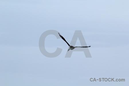 Cape horn antarctica cruise bird sky wandering albatross.