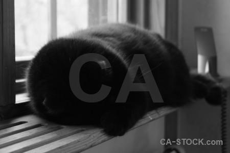 Cat animal.