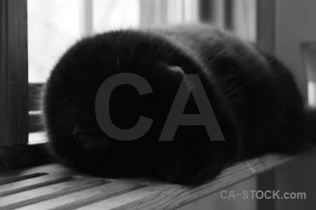 Cat animal black.