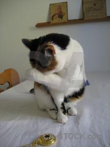 Cat gray animal.
