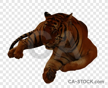 Cat tiger cut out transparent animal.