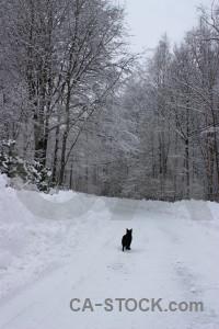 Cat winter animal snow.