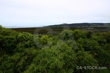 Catlins bush plant landscape south island.