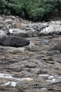 Catlins penguin animal yellow eyed rock.