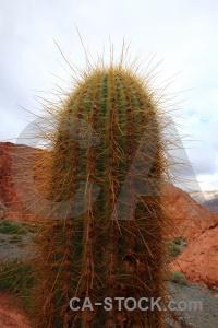 Cerro de los siete colores cactus sky cliff plant.
