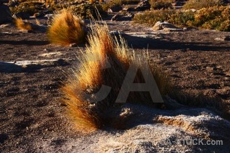 Chile andes bush south america atacama desert.