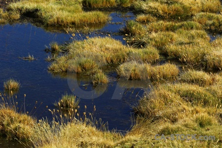 Chile el tatio andes altitude grass.