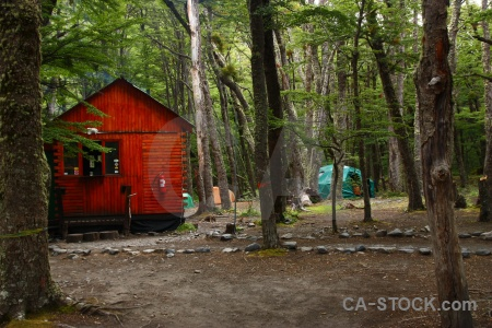Chile moss tree forest campsite.