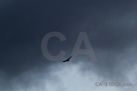 Chile patagonia sky animal circuit trek.