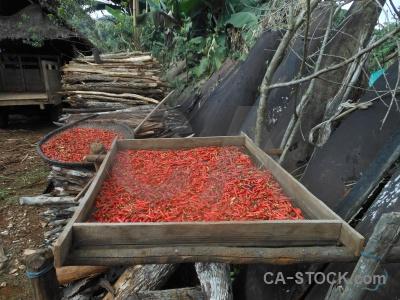 Chili hmong war laos rust.