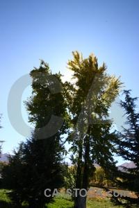 China east asia lhasa tibet grass.