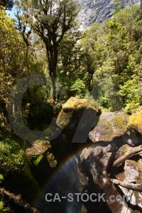 Cleddau river branch south island new zealand moss.