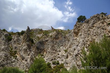 Cliff dry tree blue landscape.