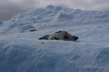 Cloud argentine islands seal antarctica cruise snow.