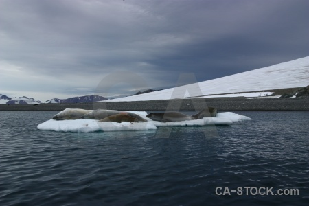 Cloud bellingshausen sea ice antarctica cruise animal.