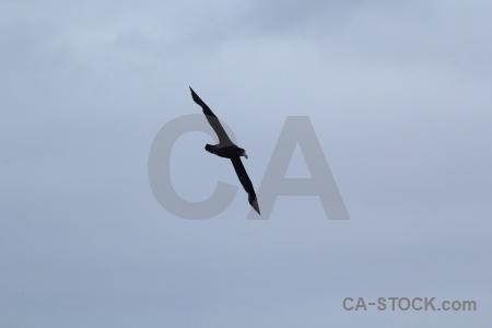 Cloud bird sky drake passage antarctica cruise.