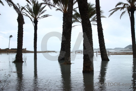 Cloud palm tree javea spain sea.