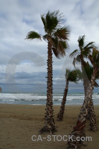 Cloud palm tree sky javea spain.