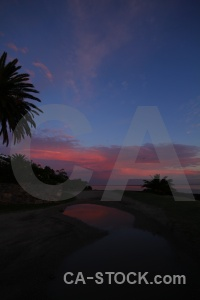 Cloud palm tree sunrise uruguay colonia del sacramento.