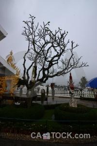 Cloud temple buddhism white ornate.